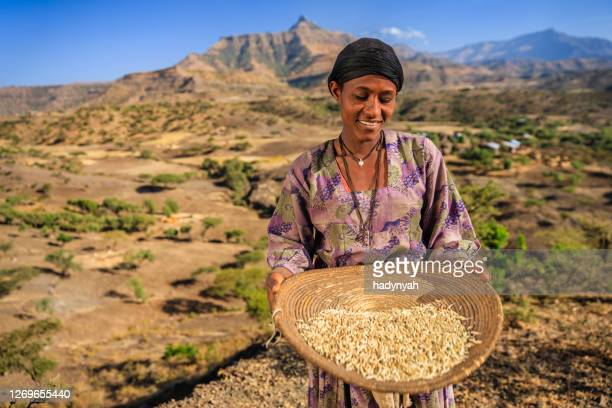 young african woman is sifting the sorghum, east africa - sorghum stock pictures, royalty-free photos & images