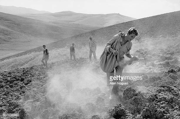 Young Algerian farm workers sowing crops in a field in Kabylie