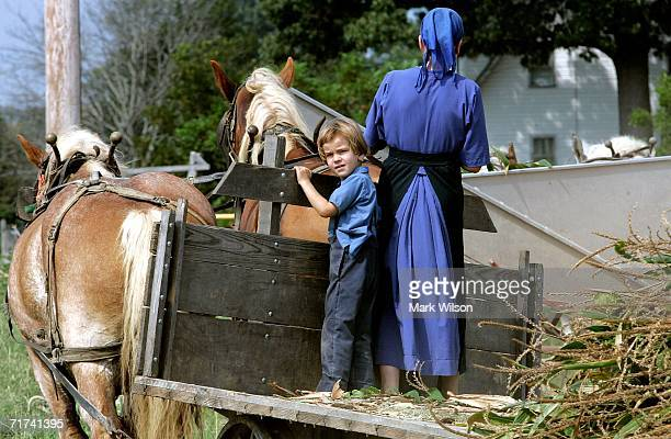 A young Amish boy stands on a wagon while his family harvest's corn August 29 2006 in Hughesville Maryland Corn and tobacco is generally harvested in...