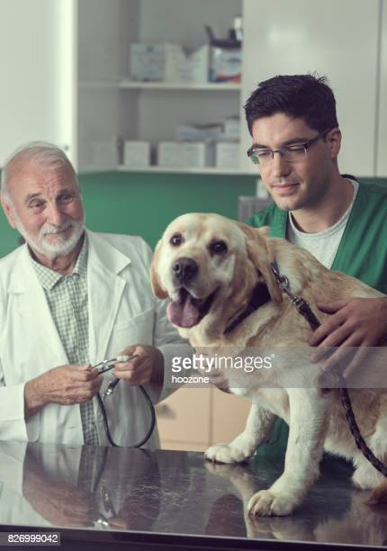 Young and Senior Veterinarian Working Together