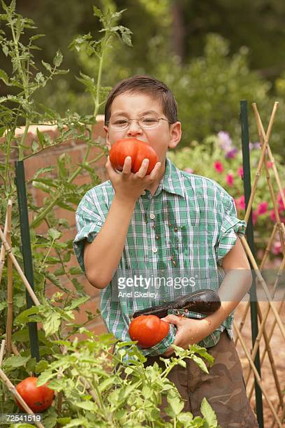 Young Asian boy eating tomatoes in garden