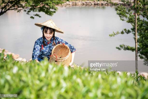 a young asian woman picks tea in a tea plantation - china east asia stock pictures, royalty-free photos & images