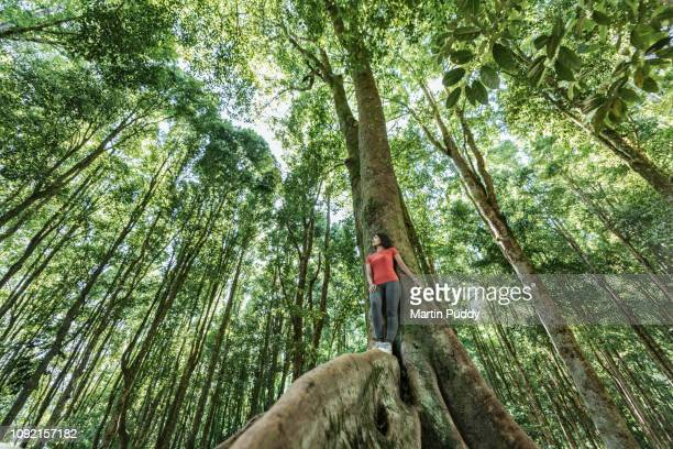 young asian woman standing on tropical in tropical rainforest setting - climate stock pictures, royalty-free photos & images