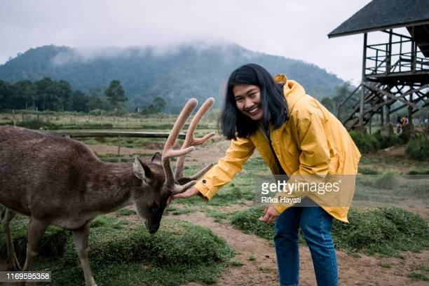young asian women feeding deer in deer farm - bandung stock pictures, royalty-free photos & images