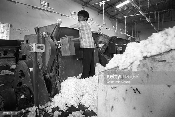 Young Assuradu 8 years old stands on a pedestal of cotton to reach the top of the cotton gin at a ginning factory on November 13 2006 in Jammikunda...