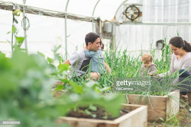 Young attractive ethnic parents inspect their greenhouse with their two young children