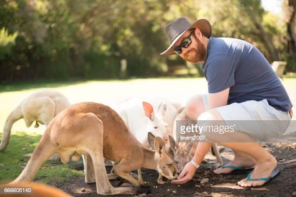 Young Australian feeding kangaroos