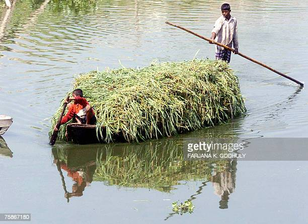 Young Bangladeshi boat boys steer their craft laden with cut grass for cattle feed along the river Turag near Dhaka 27 July 2007 As a result of...