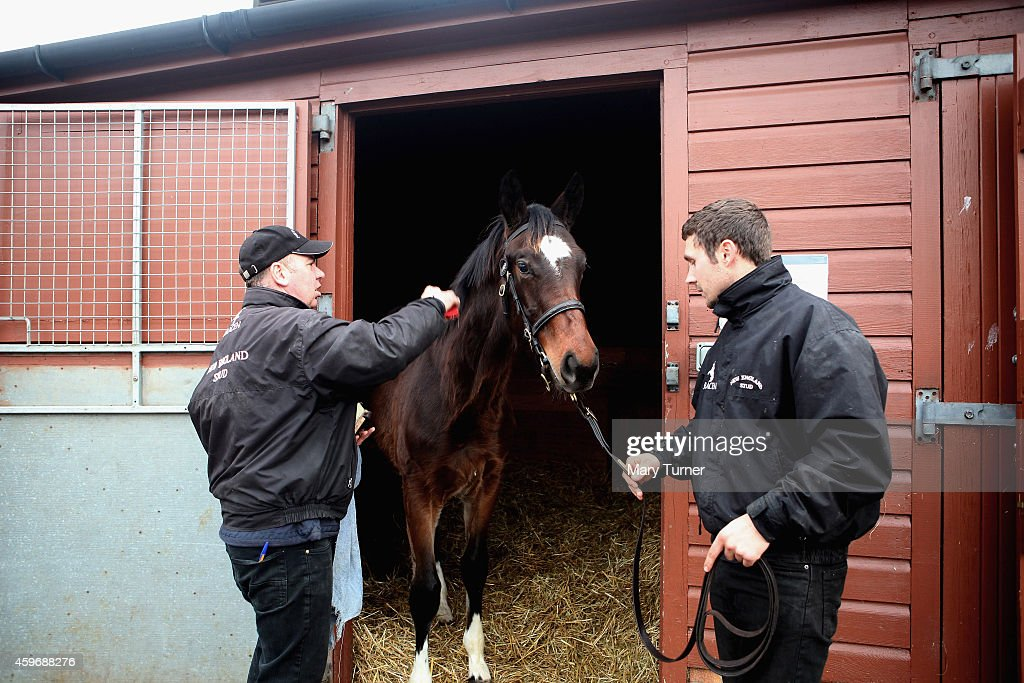 Four Foals From Legendary Racehorse Frankel Auctioned At Newmarket : News Photo