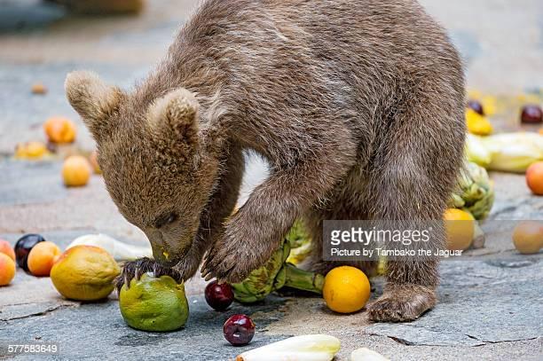 Young bear choosing fruits