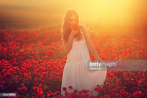 young beauty in poppy field at sunset - poppy stock pictures, royalty-free photos & images
