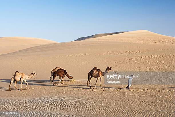 Young bedouin with camels on Western Sahara Desert in Africa