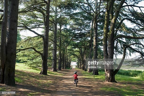 young bicyclist in clumber park - ノッティンガムシャー ストックフォトと画像