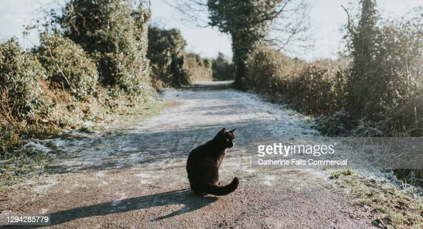 young black cat sitting on a frosty path - domestic cat stock pictures, royalty-free photos & images