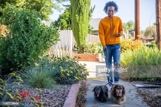 young black woman walking dogs with smartphone - dog walker stock photos and pictures
