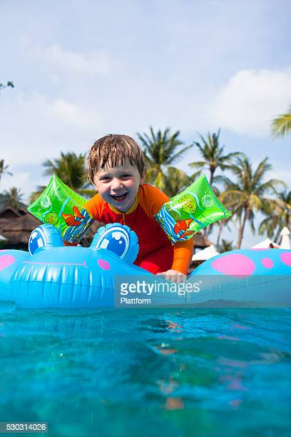 A young bog playing in a swimingpool