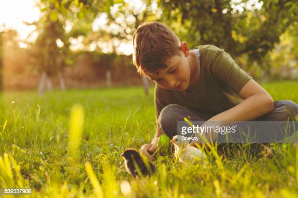 Young boy and baby chicks