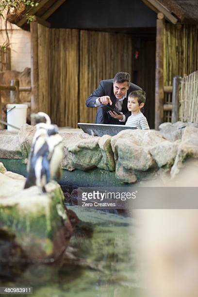 Young boy and father watching penguins at zoo