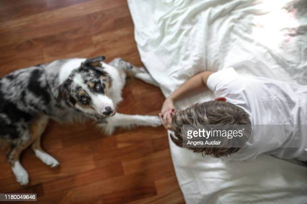 a young boy and his australian shepherd relaxing - angela auclair stock pictures, royalty-free photos & images