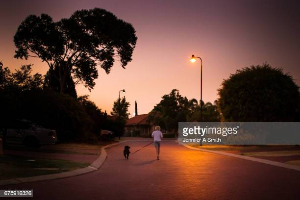 a young boy and his puppy - perth australia stock pictures, royalty-free photos & images