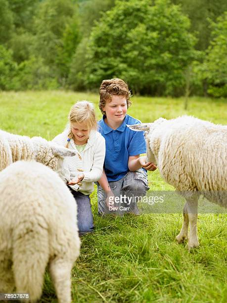 Young boy and young girl smiling and feeding sheep in a field.