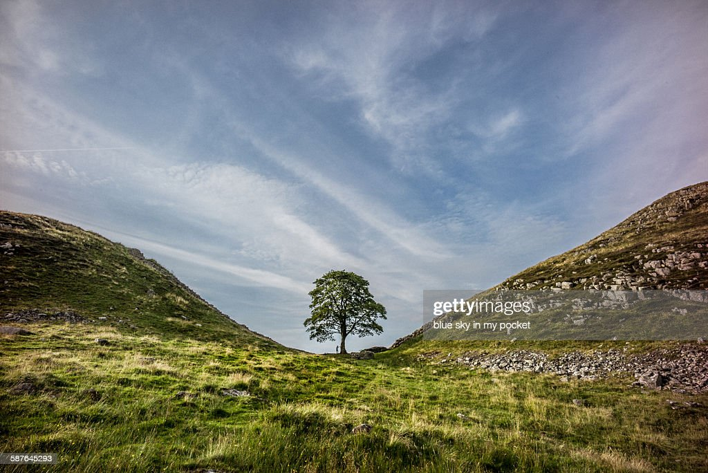 A young boy at Sycamore Gap on the Hadrians wall : Stock Photo