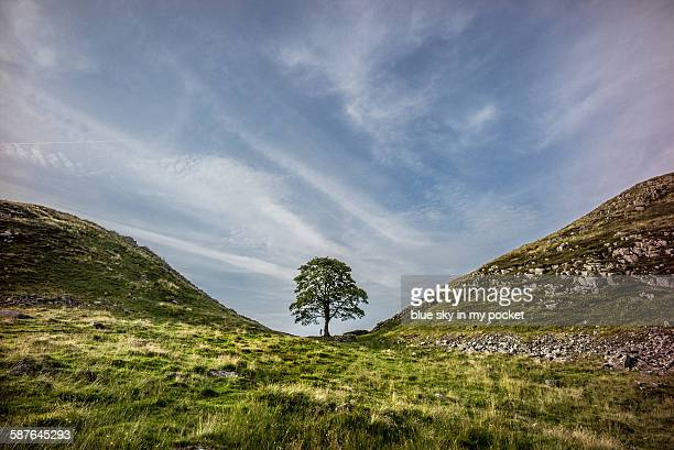 a young boy at sycamore gap on the hadrians wall - distant stock photos and pictures