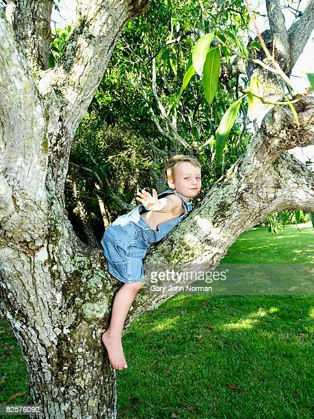 Young boy balances in tree hands out streteched