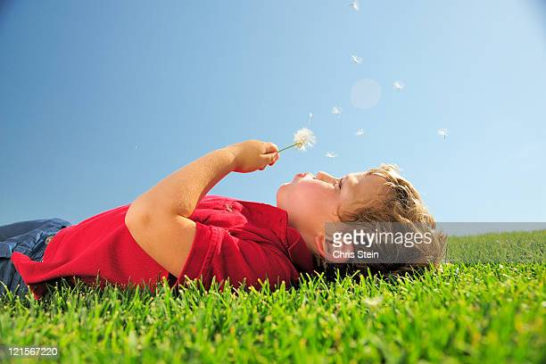 Young boy blowing on a dandelion in the grass