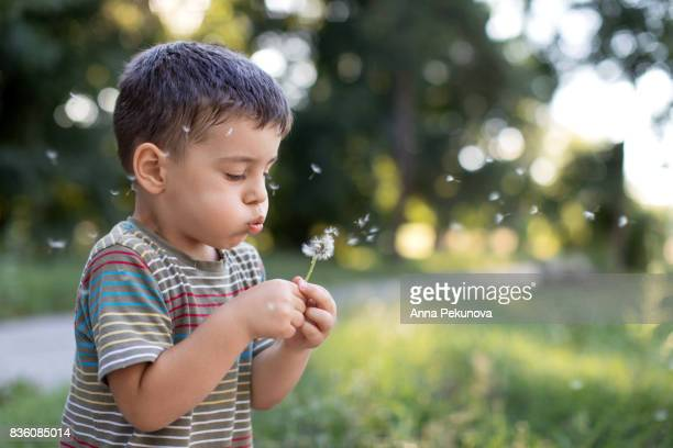 young boy blowing out dandelion - uncultivated stock pictures, royalty-free photos & images