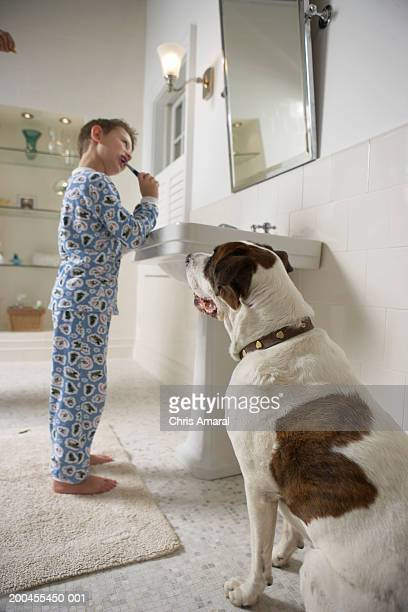 Young boy (6-8) brushing teeth in bathroom with dog
