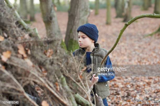 Young boy building a den in Autumnal woodland