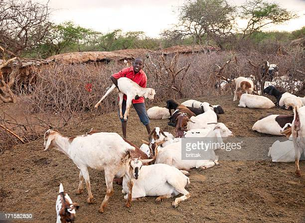 Young boy caring for his goats in Masai village.