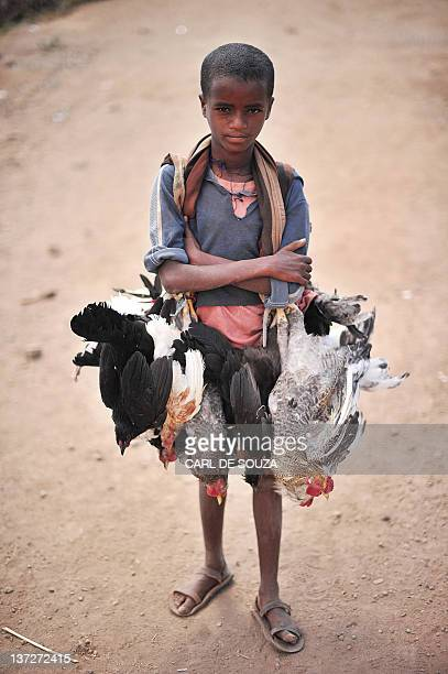 A young boy carrying chickens poses in Lalibela on January 18 on day before the annual festival of Timkat Ethiopian monks and priests are preparing...