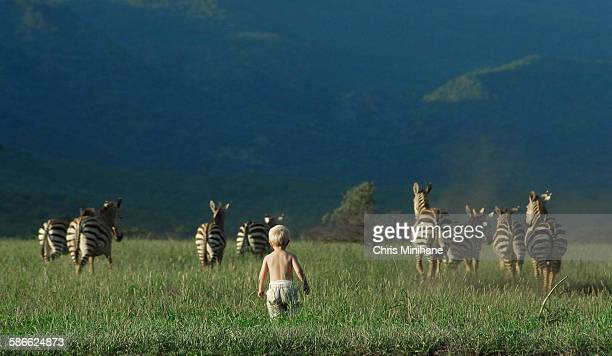 A Young Boy Chases a Herd of Zebra in Africa