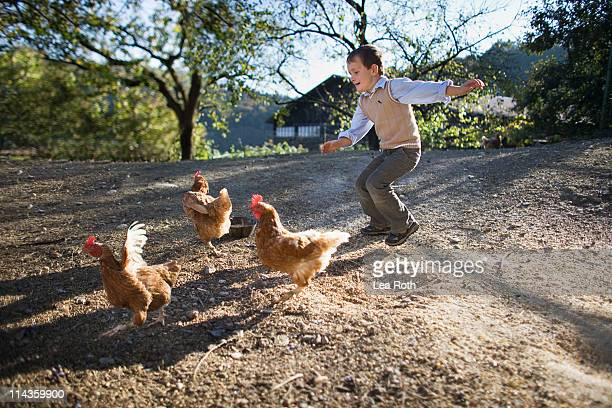 young boy chasing chicken on farm - moving after stock pictures, royalty-free photos & images