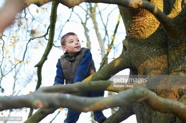 Young boy climbing a beech tree