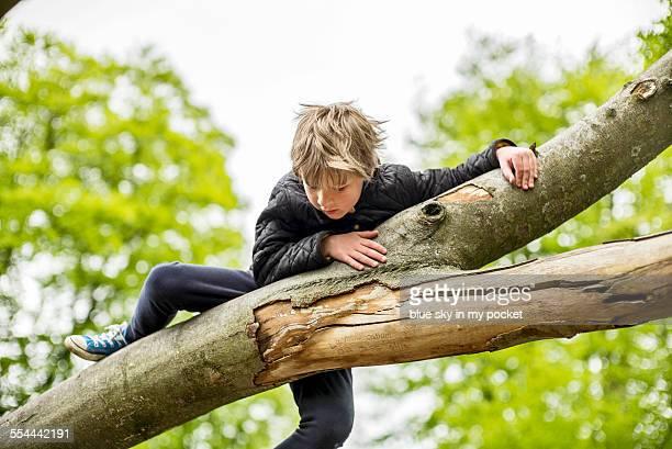 A young boy climbing a tree