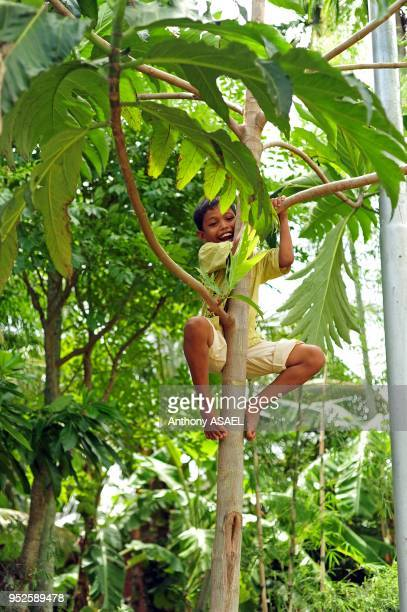 young boy climbing tree Banda Aceh Sumatra Indonesia