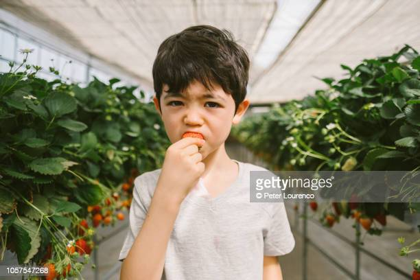Young boy eating a freshly picked strawberry
