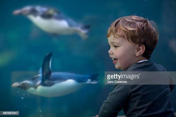 Young boy enjoying penguins swimming in aquarium