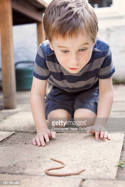 Young boy excited about a Slow Worm