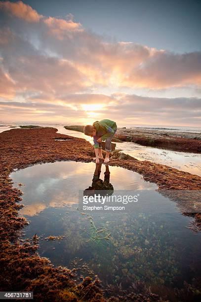 young boy exploring tide pools - tidvattensbassäng bildbanksfoton och bilder