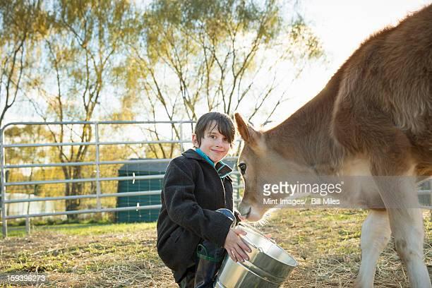 Ein kleiner Junge Füttern ein Kalb mit Eimer im paddock