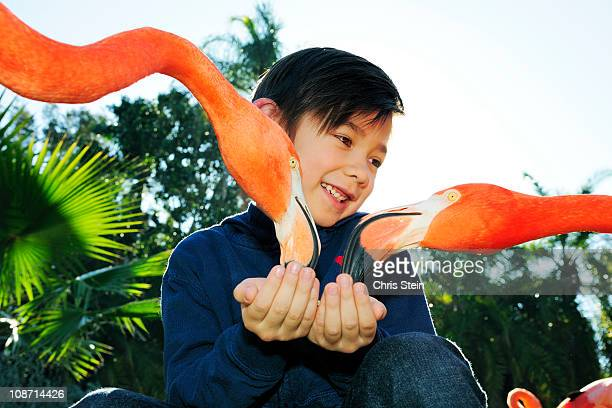 Young Boy Feeding Flamingos