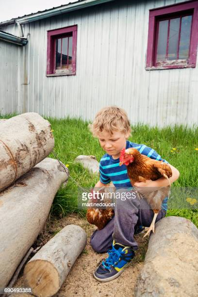 """young boy getting hens back in the chicken coop. - """"martine doucet"""" or martinedoucet stock pictures, royalty-free photos & images"""