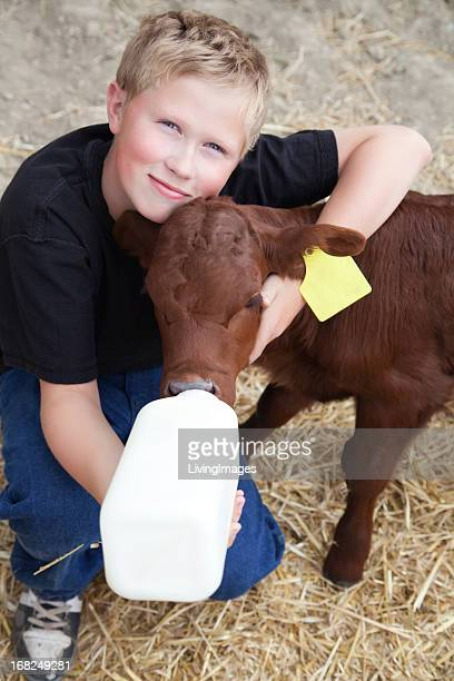Young boy giving milk from a bottle to a calf