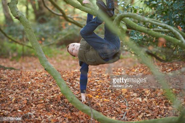 Young boy hanging from the branch of a beech tree
