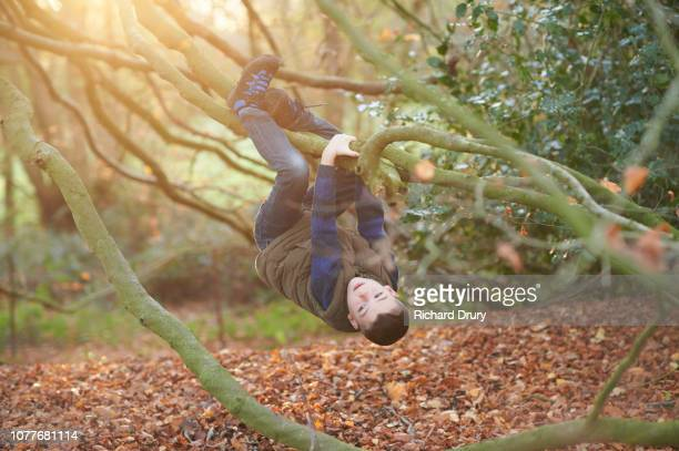 Young boy hanging from the branches of a beech tree