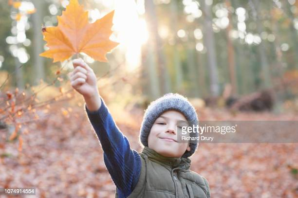 Young boy holding a leaf in Autumnal woodland